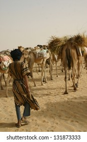 A berber nomad tends to his camel caravan  hauling salt through the Sahara desert of Mali, Africa