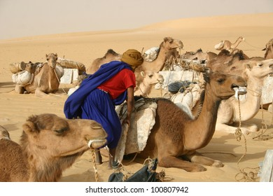 A berber nomad of the Tuareg tribe unloads salt from his camel during a rest stop for their caravan in Mali Africa.