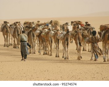 Berber nomads lead a camel caravan hauling salt through the Sahara Desert of Mali, Africa