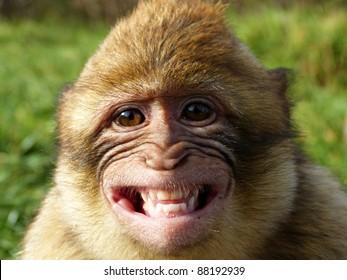 Monkey Smile Images Stock Photos Amp Vectors Shutterstock