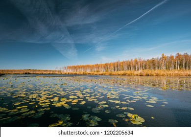 Berezinsky, Biosphere Reserve, Belarus. Autumn Landscape With Lake Pond River And Beautiful Birch Forest On Another Riverside.  Trees Woods With Yellow And Oranges Colours Foliage In Sunny Day.