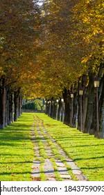 Bergamo, Italien, 25. Oktober 2020. Die Altstadt. Eine der schönsten Städte Italiens. Der Baum säumte die Allee entlang der venezianischen Wände während der Herbstsaison. Bergamo Bestes Italien