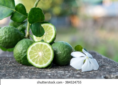 Bergamot and  green leafs with white flower