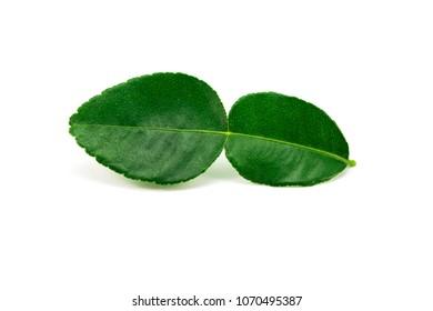 bergamot leaf isolated on a white background.