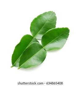 bergamot leaf on white background in top view
