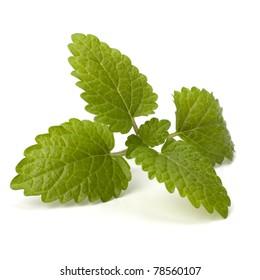 Bergamot mint or balm isolated on white background
