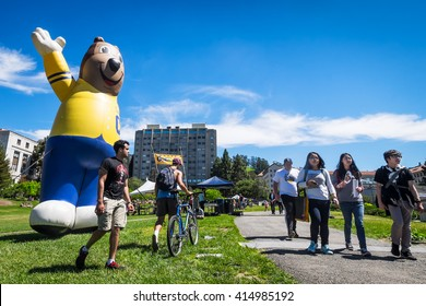 BERKELEY, CA- Apr 16, 2016: University of California Berkeley mascot Oski the Bear greets newly admitted students on Cal Day, who are invited to tour the campus and decide whether to attend.