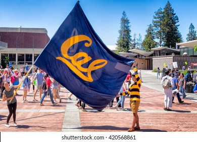 BERKELEY, CA- Apr 16, 2016: University students raise a large school flag in a show of school spirit on Cal Day, an annual campus open house for students, alumni and community visitors.