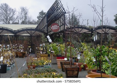 BERKELEY, CALIFORNIA - FEBRUARY 9, 2017: Berkeley Horticultural Nursery founded in 1922 celebrates its 95th birthday this year. It was founded in 1922 by George Budgen.