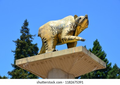 Berkeley, California / USA - July 17, 2012: Golden Bear Statue on University of California at Berkeley campus, symbol of UC Berkeley and its athletic teams, the California Golden Bears.