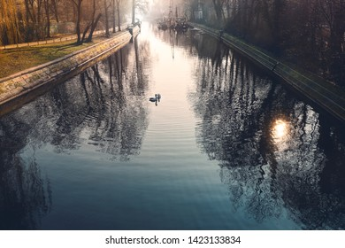 Berlin canal, morning impression with to swans