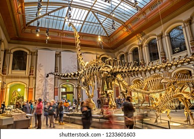 BERLIN, GERMANY - 18 Nov 2018: The main atrium of the Museum for Natural History of Berlin, fossils of plants and animals, giant dinosaurs skeletons from the late Jurassic are on display