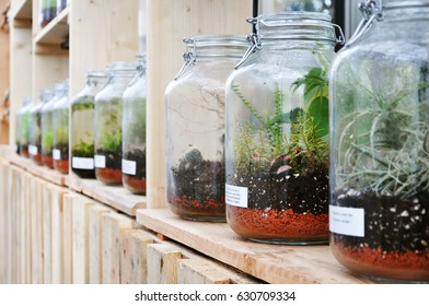 Berlin, Germany - April 13, 2017: Glass jars with plant sprouts in the Gardens of the World in Berlin.
