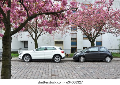Berlin, Germany - April 13, 2017: Street in a residential area of Berlin with parked cars and pink flowering almond trees in spring.