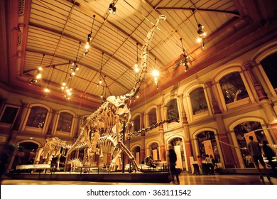 BERLIN, GERMANY - AUG 30: Giant skeletons of Brachiosaurus and Diplodocus in Dinosaur Hall on August 30, 2015. Natural History museum, established in 1810, houses millions paleontological specimens
