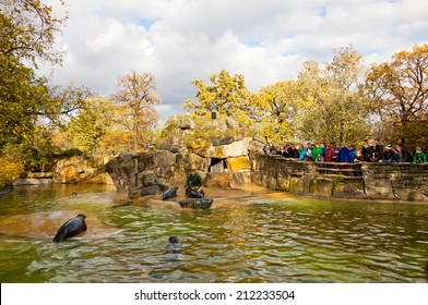 BERLIN, GERMANY - NOVEMBER 9, 2013: Fur seals feeding show at the Berlin Zoo (Zoological garden). It's the oldest garden in Germany with most comprehensive collection of species in the world
