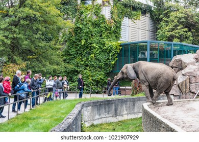 BERLIN, GERMANY - SEPTEMBER 23,2017: African elephant eating the grass at its aviary in Tierpark Berlin (Zoo of Eastern Berlin), Germany. Tierpark Berlin is home to over 9000 exotic and native animals
