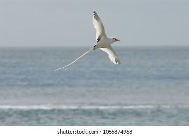 Bermuda National Bird The LongTail