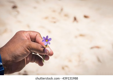 The bermudiana, the National flower of Bermuda in  the hand of a local tour guide.