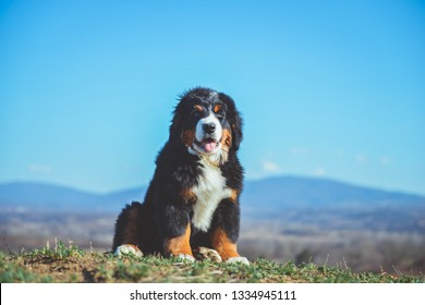 Mountain Puppy Images Stock Photos Vectors Shutterstock