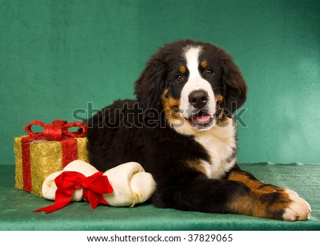 Bernese mountain dog christmas gifts