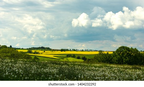 Bernstadt auf dem Eigen, Saxony/Germany - May 21st 2019. Scenic View of a yellow brassica rape seed field in the distance with ripe dandelion flower meadow in foreground