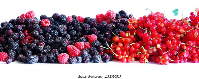Berries of blackberries and currants.