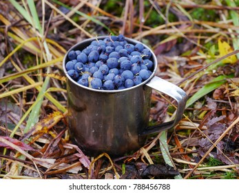 Berries blueberry in metal mug at the grass