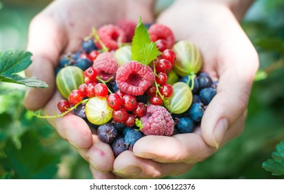 Berries and fruit. Ripe fruit in the palm of a young girl. Raspberries, strawberries, gooseberries, red currants, blueberries.