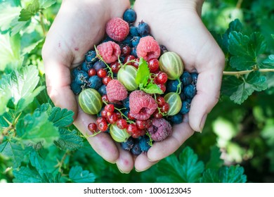 Berries and fruit. Ripe fruit in the palm of a young girl.
