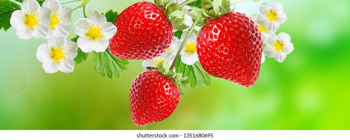 berries fruits strawberry