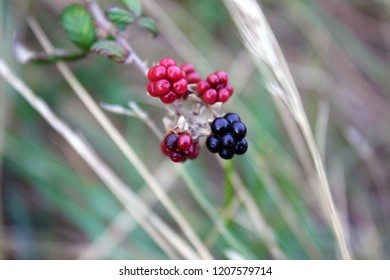 Berries in the island