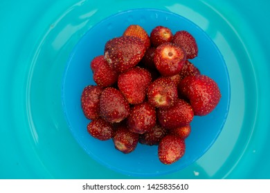 BERRIES - red strawberry on blue