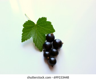 Berry black currant, green leaf on a light background