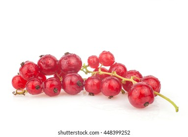 Berry currant
