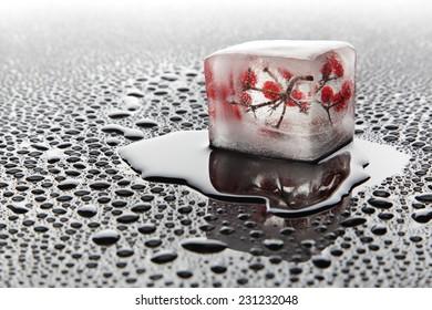 Berry in the ice (viburnum)