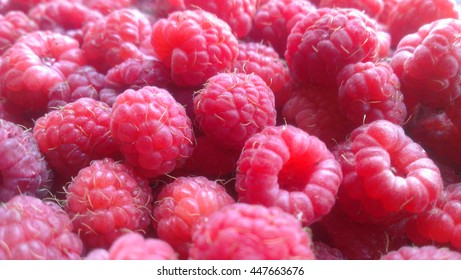 berry raspberry macro in daylight in the summer.