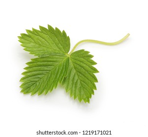 Berry strawberry leaf isolated on white background