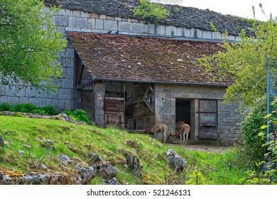 Besancon, France - May 1, 2012: Llama in Zoo in the citadel in Besancon, Bourgogne Franche Comte region in France.