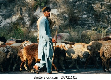 BESHAM, PAKISTAN, OCT 13, 2019: Unidentified man with his herd of sheeps. In muslim society in Pakistan men go out and do everything, women usually stay at home.