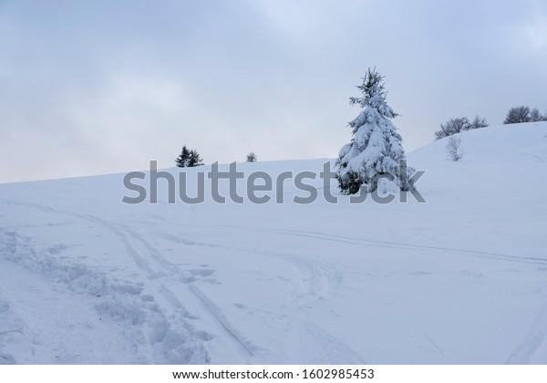 beskids-lonely-spruce-snowy-tree-600w-16