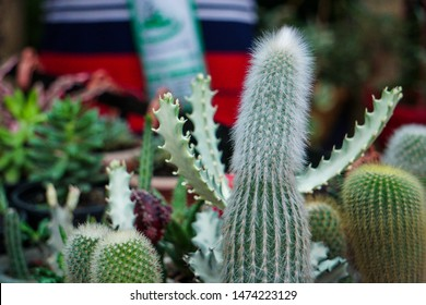 The best cactus images and pictures for your projects. HD quality, No attribution required, Free for commercial use.
