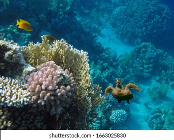 The Best Coral Reef Locations: Red Sea are the largest natural structures in the world