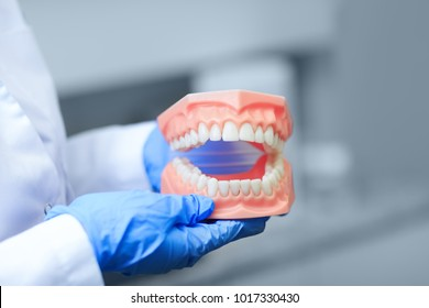 Best denture picture with the focus on teeth. Real dentist holding tooth model during a training presentation. Teeth orthodontic dental model or human jaw. Selective focus on teeth.