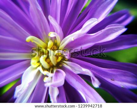 Best Flower Wallpapers Natural Original Hd Stock Photo Edit Now