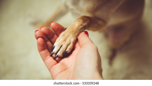 Best friend.Human and the animal connection. The concept of trust and friendship.