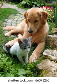 Best friends. Domestic cat and golden retriever in a hug.