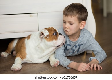 Best friends english french american bull dog and cute child handsome boy sitting under bed and looking on each other on warm floor parquet wood block.Red white adorable dog and awesome teenager. 2017