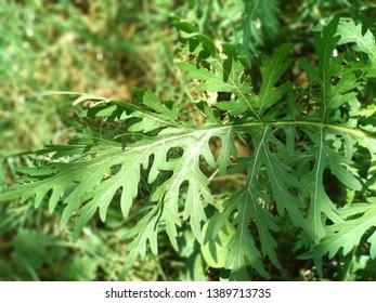 best natural green leaf wallpepar