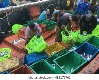Besut, Malaysia- September 30, 2016: Workers inspecting and grading fresh fishes before it  were ready to be traded at fish landing point in Besut. Besut is one of the fish producer in Malaysia